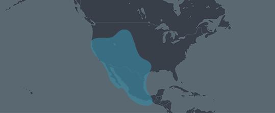 Indigenous Americas-Mexico